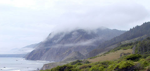 lost coast, redwoods